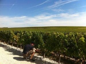 Blue Skies of Bordeaux.