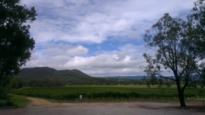 The view from Stein cellar door. Tough Office...
