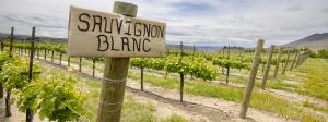 sauvignon-blanc-white-wine-guide
