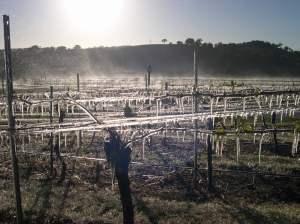ice-on-the-vines